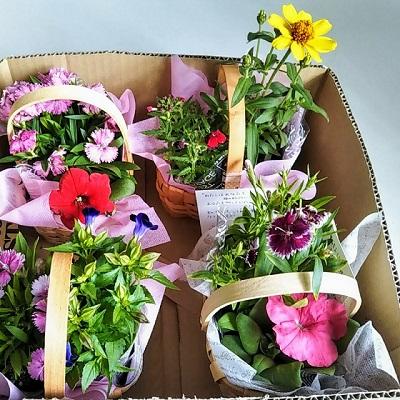 【報告】花の日合同礼拝後、お花のプレゼントをしました